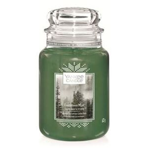 Bild von Evergreen Mist Jar L (gross/grande)